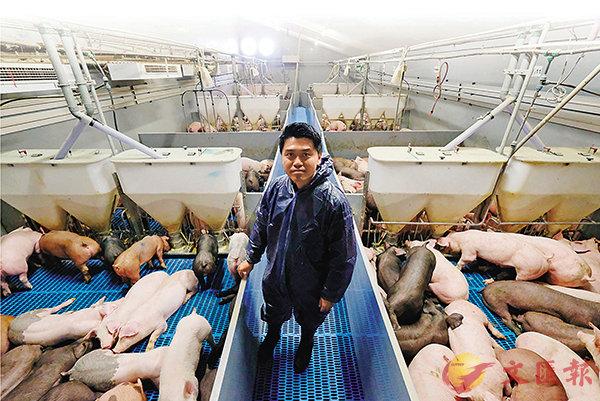 ■ 劉漢傑不認為養豬是低下工作。