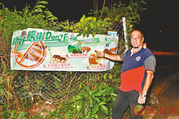 ■不少野豬出沒地點掛有漁護署「唔好餵喇」海報,勸村民勿再向野豬餵食。 資料圖片