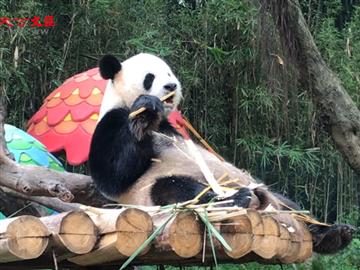 親子遊 | 住熊貓酒店看野生動物
