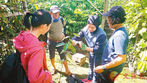 ■尉芝(左)跟汶萊學生學習如何採集植物樣本。 受訪者供圖