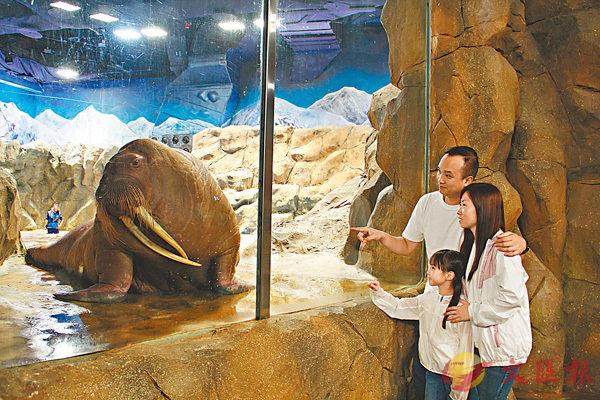 ■「約會海象」零距離接觸海象,探索牠們的世界。