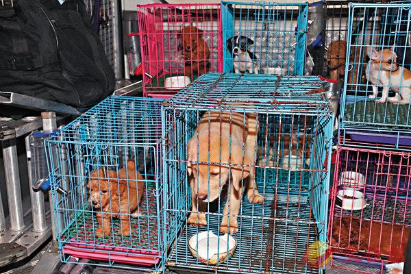 ■港府正研究增加虐待動物的罰則。 資料圖片