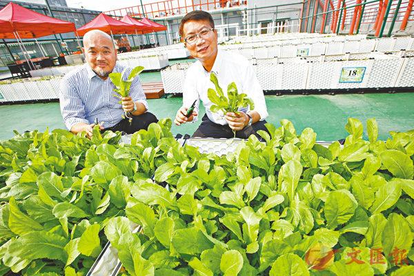 ■仲量聯行陳志強(左)及江澤雄介紹該行在港開設的第二個「空中農莊」項目。