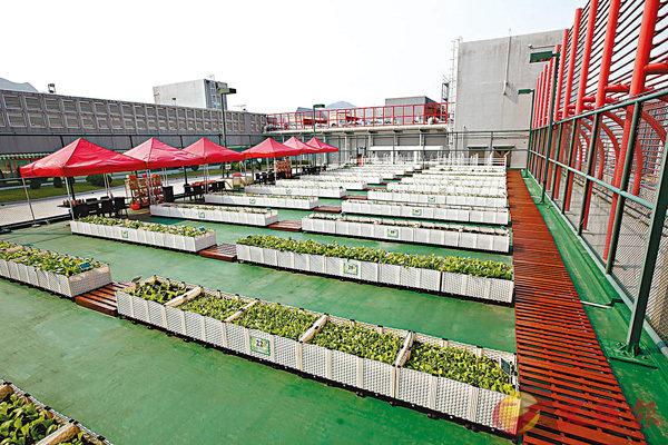 ■農莊原為使用率極低的網球場。