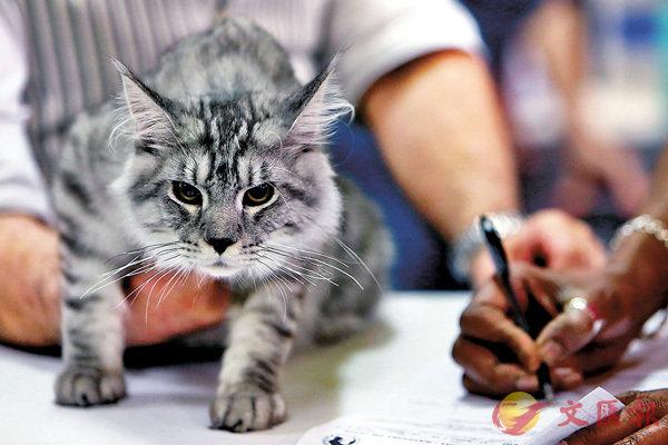■自古以來,貓兒的天性都是捕鼠為生。 資料圖片