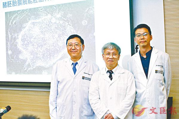 ■由港大醫學院主導的研究團隊突破性首創取得幹細胞的新方法。圖左及中分別為劉澎濤和楊樹標。香港文匯報記者曾慶威  攝