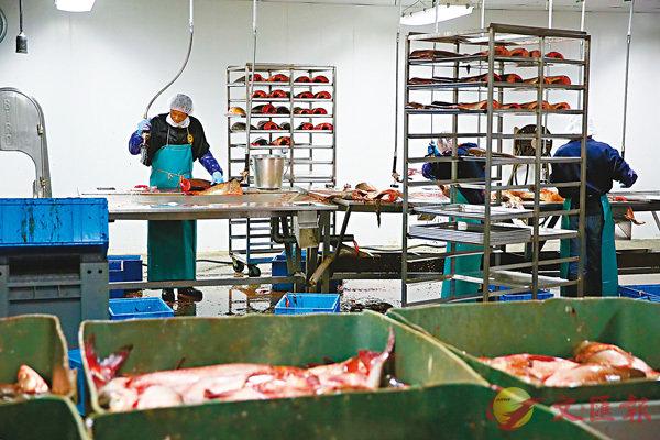■有漁業界人士指,美國的勞動力成本較中國高出很多。圖為美國加州一個漁業加工廠。 資料圖片
