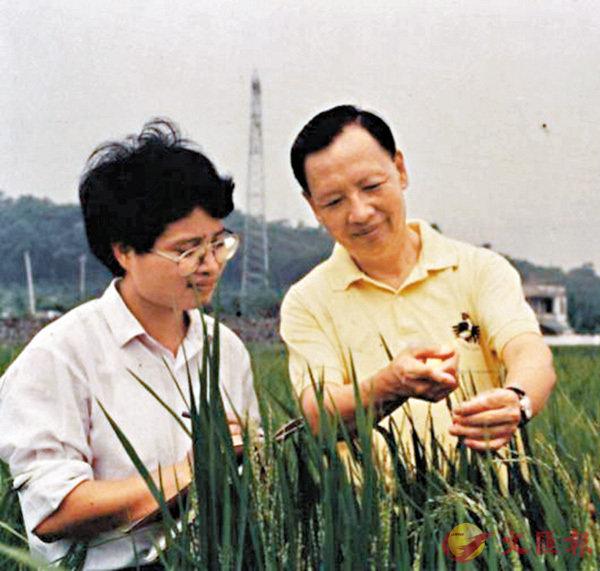 ■盧永根(右)在水稻試驗地指導學生。 網上圖片
