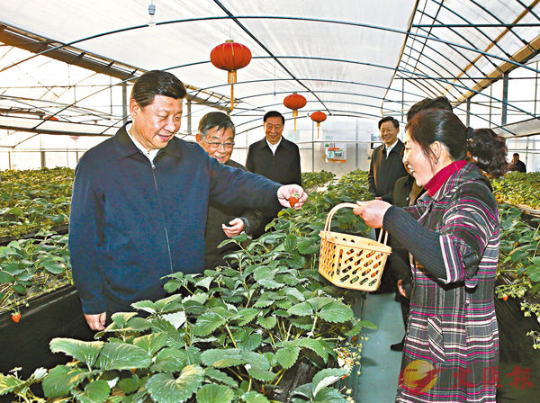■習近平總書記在世業鎮實地察看草莓生長情況。 資料圖片