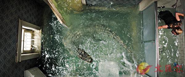 ■洪水水位不斷上升,卻突然出現了能夠直接奪去生命的巨鱷。