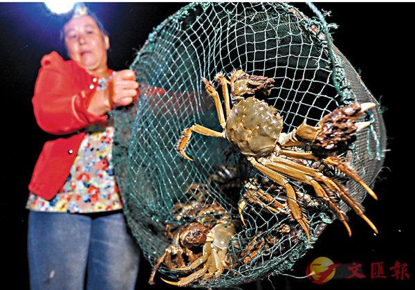 ■ 經銷大戶史團結表示,雖然目前固城湖大閘蟹還沒成熟,但是長勢喜人,個頭普遍大於去年。 受訪者供圖