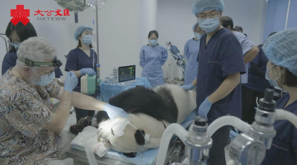 大熊貓牙齒普查了解一下¡I