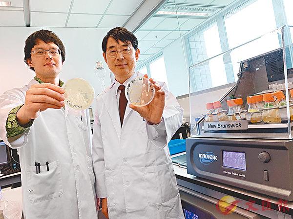 ■錢培元(右一)率領的研究團隊,以合成生物方法破解大腸桿菌素致癌機制。香港文匯報記者詹漢基 攝