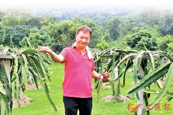 ■ 阿燦展示「龍場」內種植的有機農作物。