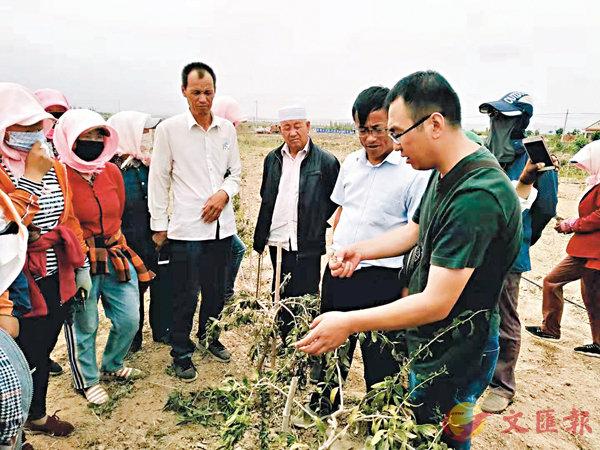 ■龍源村村民學習種植枸杞。 受訪者供圖