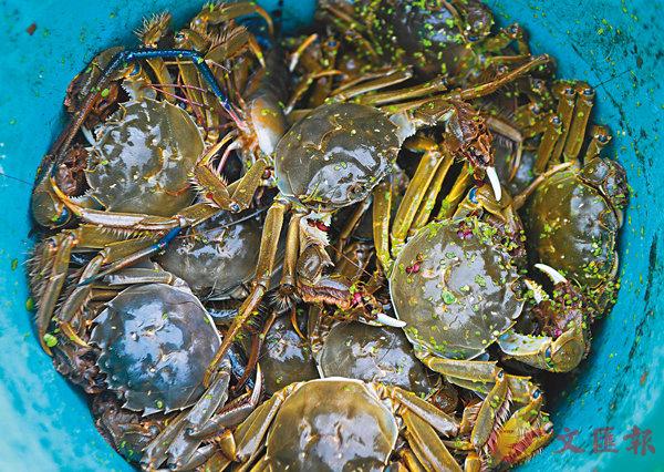 ■圖為湖州蟹。 資料圖片