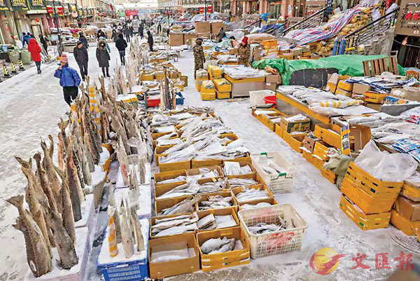 ■整個魚市成了一個天然大冰櫃,這些魚被凍得十分堅硬,魚市商家就會把這些大魚插在雪裡展示。 香港文匯報記者于海江 攝