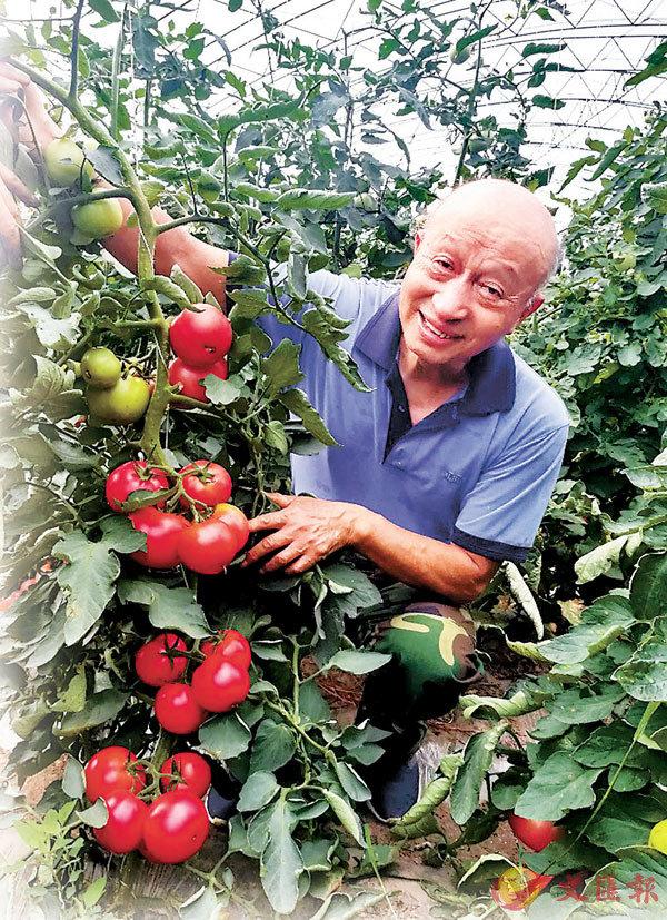 ■ 為了番茄能紅遍全中國,李景富甘願奉獻一輩子。