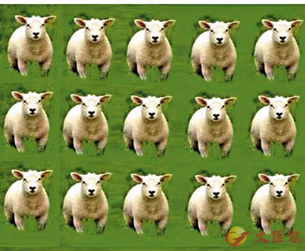 ■失眠數綿羊,有效嗎?  作者提供