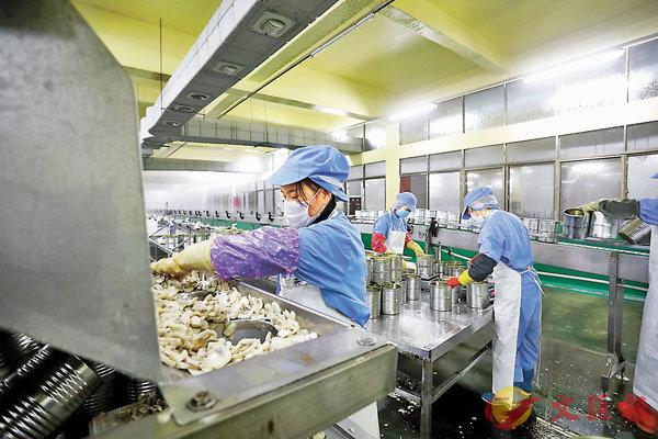 ■官方指疫情防控阻擊戰和脫貧攻堅戰都是重大政治任務。圖為近日撫州市樂安縣的一家食品有限公司蘑菇罐頭生產車間,工人戴�茪f罩在加工雙孢蘑菇。 新華社