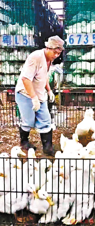 ■ 王立義從內地進口的大量家禽,從以前送到酒樓轉為送往街市。 記者李昌鴻  攝