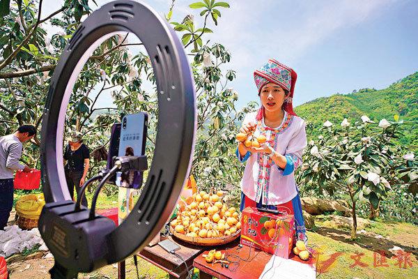 ■近日,廣西龍勝各族自治縣的枇杷進入收穫期,工作人員通過網絡直播銷售枇杷。