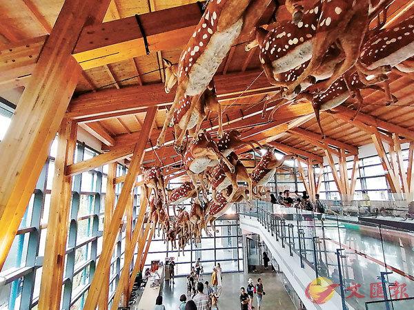 ■展館出入口的頂上面一群梅花鹿標本裝飾非常有氣勢。