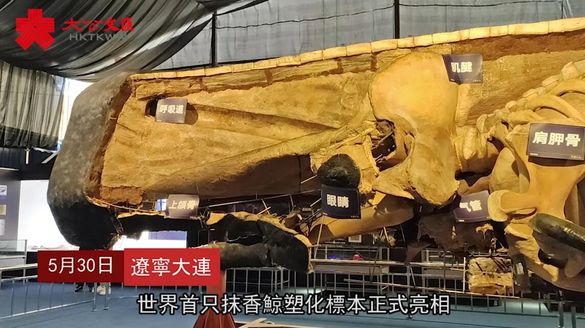 中國智造世界最大生物塑化標本亮相