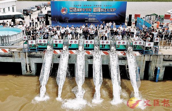 ■  6月6日,2020年長江口珍稀水生生物增殖放流活動在上海崇明區長江口水域舉行。  新華社