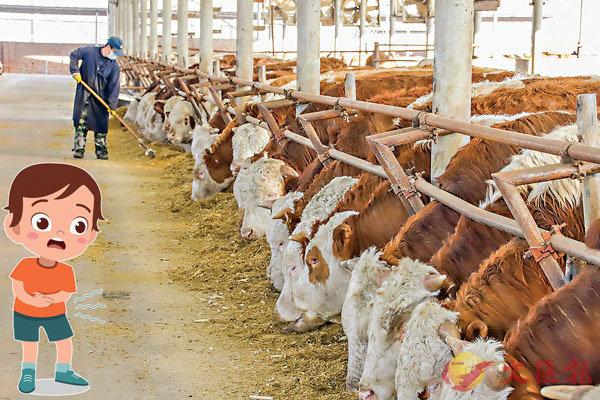 ■ 出產一磅牛肉要用2,400加倫水,相比下一磅小麥只要25加侖。 資料圖片