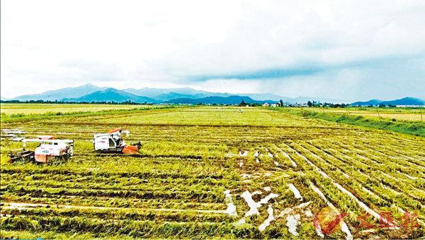 ■大型收割機正在田間勞作。香港文匯報記者黃寶儀  攝