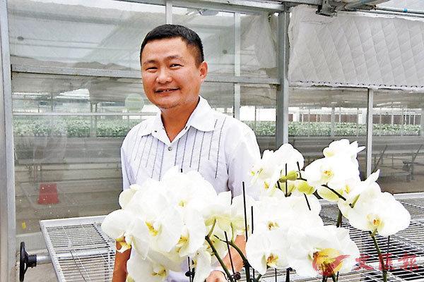 ■提起蝴蝶蘭,台商黃耿達臉上滿是笑意。 網上圖片
