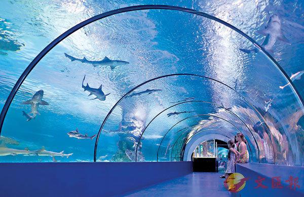 ■ 水族館應否圈養動物引起社會關注。 網上圖片