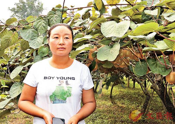 ■ 楊麗從11年前的跑市場、6年前在QQ賣貨,再到如今通過微商賣貨,嚐盡了獼猴桃銷售的酸甜苦辣。