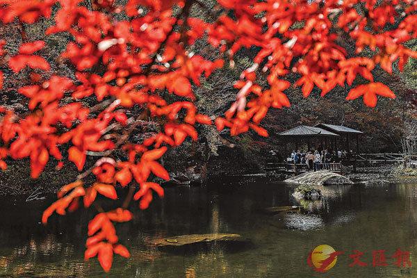■杜牧的作品色彩強烈,《山行》一詩描寫一片紅色的楓林。資料圖片