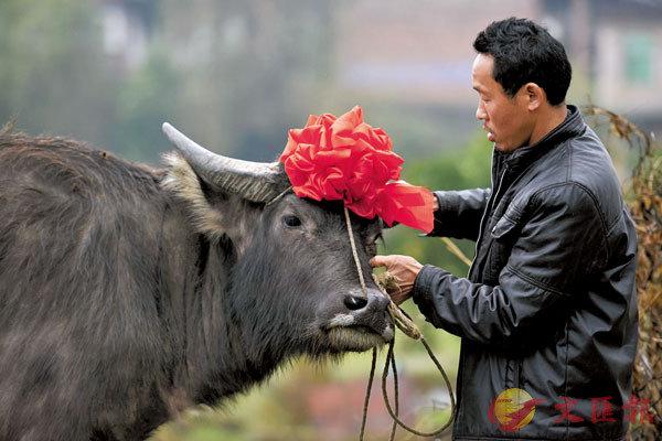 ●中文的搖錢樹,英文則是「現金牛」。資料圖片