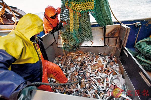 ●英國與歐盟就捕魚權達成協議。 資料圖片