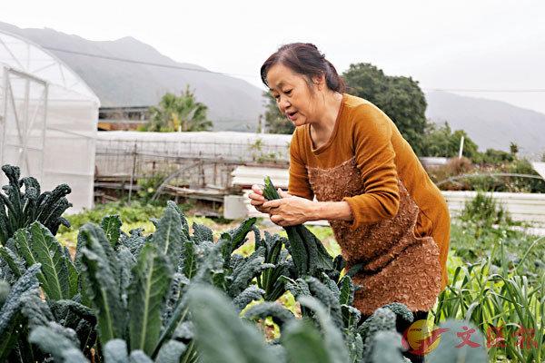 ● 香港的農地愈來愈少。 資料圖片