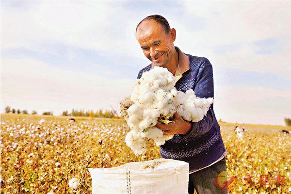 ● 隨�荓譬祩鱆煽隊峞A手工採棉日漸式微。圖為新疆巴音郭楞蒙古自治州且末縣的村民正在採摘棉花。 香港文匯報通訊員梁浩 攝