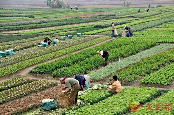 ● 貿易是否公平,影響農民的生計。 資料圖片